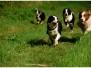 Plavení psů