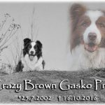 CRAZY BROWN GASKO PRIM