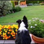 zahradni-straz